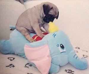 pug, cute, and dog image