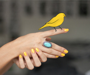 bird, nails, and yellow image
