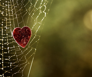 heart, love, and spider image