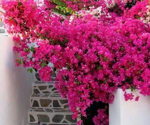 beautiful, Greece, and house image