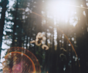 forest, hipster, and photography image