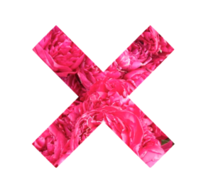 flowers, pink, and x image