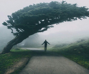 foggy, indie, and nature image