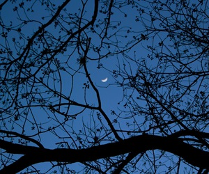 moon, night, and trees image