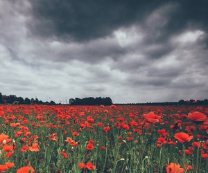 flowers, floral, and grunge image