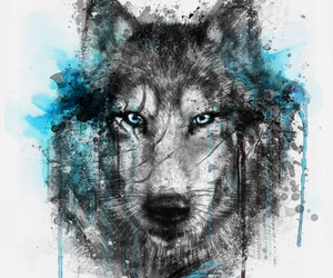 wolf, draw, and drawing image