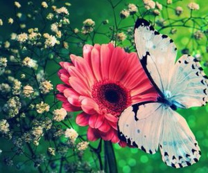 butterfly, flores, and flowers image