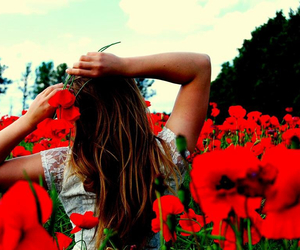 field, poppies, and girl image