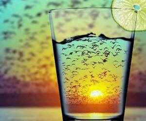 glass, summer, and birds image