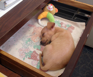 dogs, puppy, and baby animals image