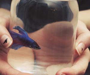 fish, blue, and animal image