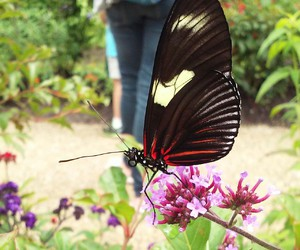 butterflies, explore, and butterfly image