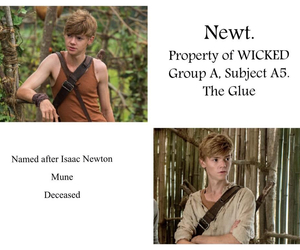 newt and wicked image
