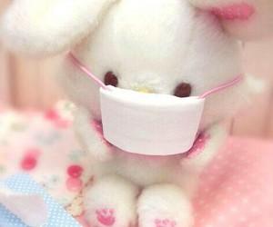 rabbit, かわいい, and ふわふわ image