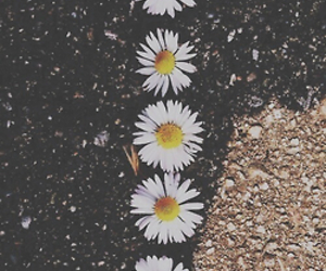 concrete, daisy, and deep image