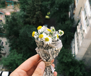 flowers, bouquet, and daisy image