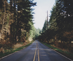 road, nature, and tree image