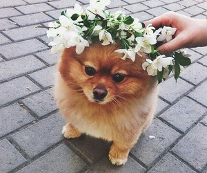 cuteness overload, flower crown, and fluffy image