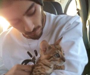 zayn malik, one direction, and cat image