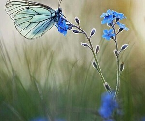 animal and butterfly image