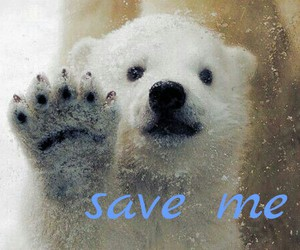 animal, baby, and help image