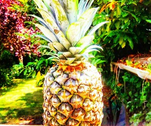 ananas, filter, and summer image