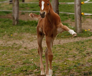 dressage, horse, and foal image