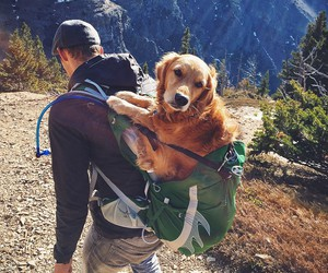 dog, travel, and mountains image