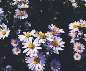 flowers, nature, and summer image