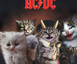 cat, ac dc, and ACDC image