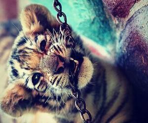 cat cut beautiful animal image