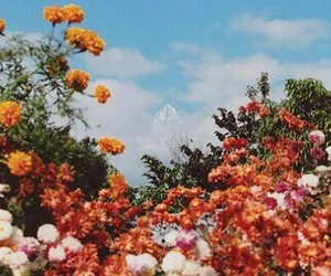 flowers and warm indie image