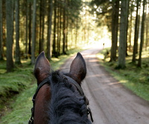 horse and forest image