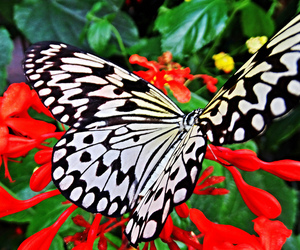 black and white, butterfly, and nature image