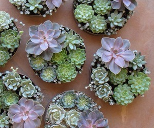 plants, nature, and succulents image