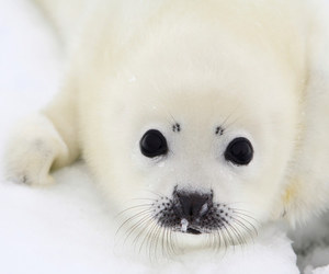 seal, cute, and baby image