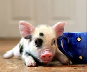 pig, animal, and piggy image