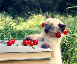 cat, cherry, and book image