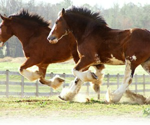 horses and clydesdale image