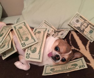 dog, money, and cute image