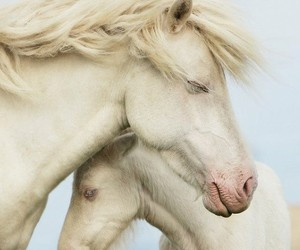 animals, nature, and horse image