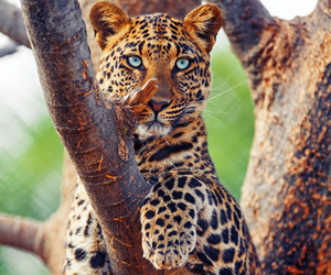 leopard and animals image
