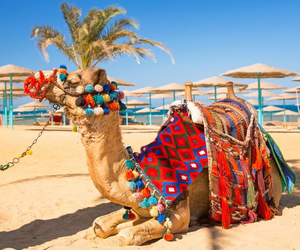 africa, camel, and colour image