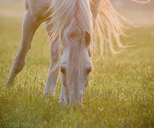 horse, nature, and photography image