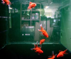 fish, orange, and animal image