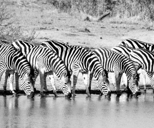 africa, animals, and beautiful image