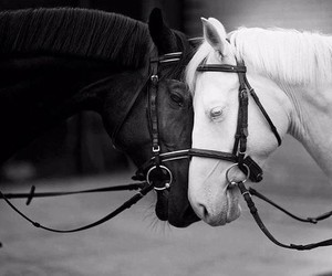 black, white, and horse image