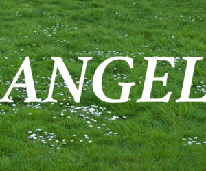 angel, pale, and text image