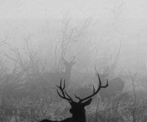 animal, deer, and black and white image