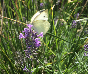 butterfly, flower, and summer image
